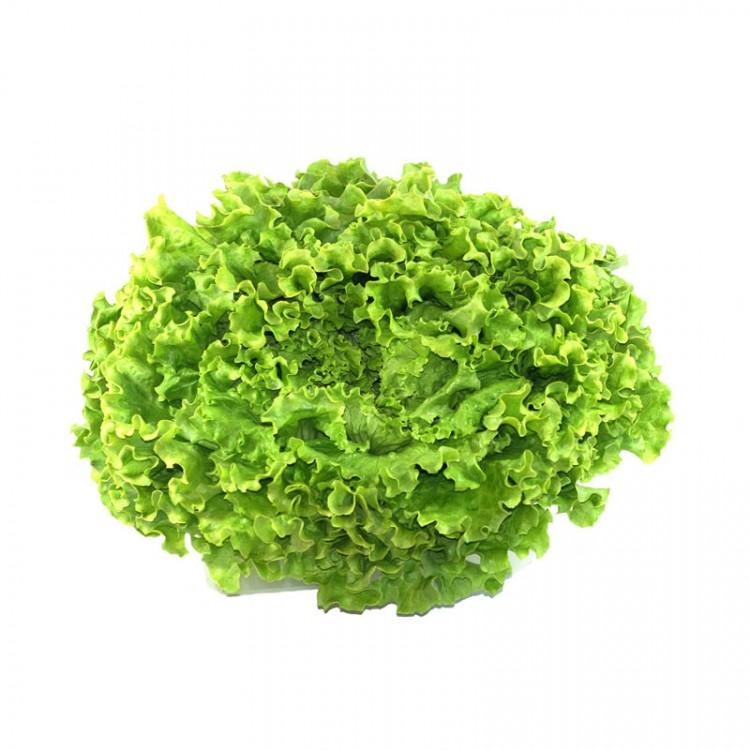 Salade Batavia verte BIO, la pièce